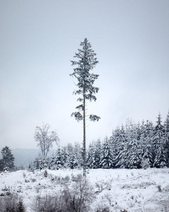 Lonesome tree near Reinsfeld #hochwald